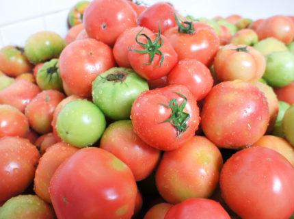 ドライトチトマト20gパック